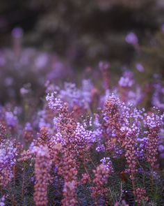Whimsical Raindrop Cottage, jnblmnop: Heather by A blond-Tess on Flickr.