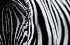 The look of nature Photo by Marco T. — National Geographic Your Shot
