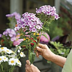 Basic flowers to plant for plentiful blooms.