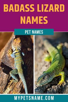 Take a look at our list of badass lizard names, for some trendy name inspiration. Cool Pet Names, Funny Names, Lizard Names, Reptiles Names, Pet Lizards, Name Inspiration, Bold Colors, Physique, Your Pet