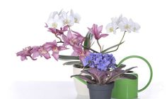 Diez plantas para regalar. Día de la Madre