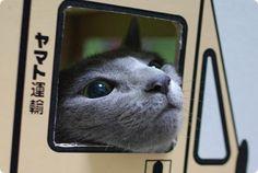 なんか切ないから猫画像くれ