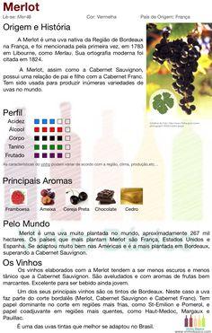 Merlot: Características da uva, aromas, perfil e estilos de vinhos.
