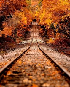 😍 Who is in love with fall colors? Repost from Fall magic in Michigan 🍁🍂 Photography by Best Travel Insurance, Autumn Scenery, Autumn Aesthetic, Foto Art, Fall Pictures, Track Pictures, Monica Bellucci, Autumn Leaves, Autumn Fall