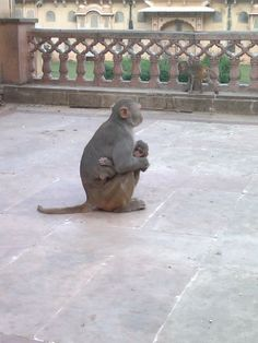 Monkey Temple in Jaipur, India. photo credit: Paul Suit, Made By Survivors