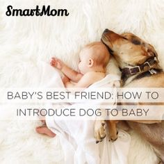 How to Introduce Dog to Baby - SmartMom