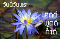 Image result for วันพระ