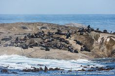 The seal colony, just beyond Boulder Bay. Namaqua National Park