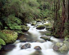 Toorongo River, West Gippsland,   Australia