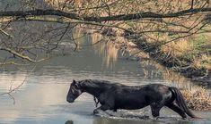 Ατίθασα άλογα στη φύση της Καρδίτσας Greece, Horses, Animals, Colors, Greece Country, Animales, Animaux, Horse, Colour