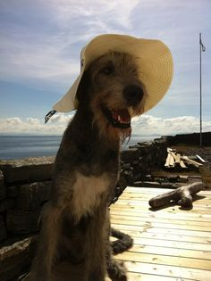 Great Blog from two beautiful Irish Wolfhounds. Absolutely lovely
