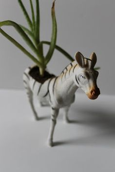 Zebra planter by ambermichele Game Of Thrones Wolves, Zebras, Planters, Christmas Ornaments, Holiday Decor, Crafts, Big, Room, Bedroom