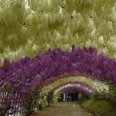 """Amazing Fairy-Tale Flower Tunnel In Japan.Straight out of a dream, this is Wisteria Tunnel at Kawachi Fuji Gardens, in Kitakyushu, Japan. Absolutely breathtaking."""