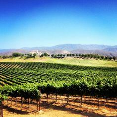 Leonesse Winery #wine #vineyards #iphone