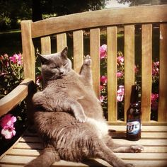 A cat who is having the best day ever.