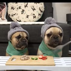 🐶 Are you one of the pug lovers or french bulldog lovers? 🐶 If you do, the… - Welpen Funny Animal Videos, Cute Funny Animals, Funny Animal Pictures, Cute Baby Animals, Funny Dogs, Pug Videos, Cute Pug Puppies, French Bulldog Puppies, Cute Dogs