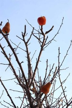 Inspirations for the Winter time  -Cut the bottoms out of some pears and apples and poke them on the ends of branches for  fruit-eating birds.
