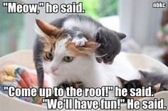 Lolcats - motherhood - lol at funny cat memes - funny cat pictures I Love Cats, Crazy Cats, Cute Cats, Cat Fun, Baby Animals, Funny Animals, Cute Animals, Funniest Animals, Funny Cat Memes