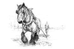 #draft #horse in black ballpoint pen by Hermien Levels, via Behance
