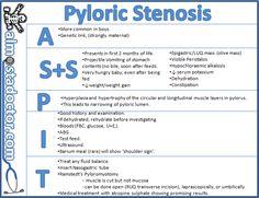 pyloric stenosis - Google Search