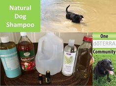 Here's the recipe for the all-natural dog shampoo we use on our black lab, Lizzy.  It smells great!  3 oz Castille soap, 2 oz Apple Cider Vinegar, 1 oz Vegetable Glycerin, 2 oz Distilled water, 5 drops Wild Orange essential oil. and 3 drops Lemon essential oil.  Mix it all together and store in a glass container.  www.onedoterracommunity.com   https://www.facebook.com/#!/OneDoterraCommunity