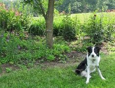Create a Dog-Friendly Wildlife Garden -   With a little planning and the right mix of plants, homeowners can design a haven not only for wild animals but for pets as well.