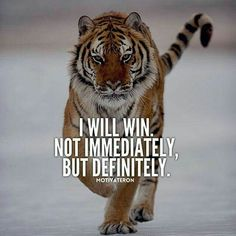 Inspirational And Motivational Quotes : 29 of the Best Quotes on Success and Life. - Hall Of Quotes Tiger Quotes, Lion Quotes, Positive Quotes, Motivational Quotes, Inspirational Quotes, Strong Quotes, Positive Vibes, Motivation Instagram, Wisdom Quotes