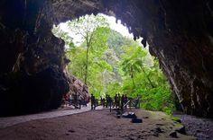 Cueva del Guácharo
