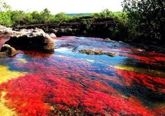 River of Five Colors/ Caño Cristales in Colombia Rainbow River, Earth Photos, Nature Photos, Indoor Water Garden, Crystal River, Nature View, Aquatic Plants, Natural Wonders, Continents