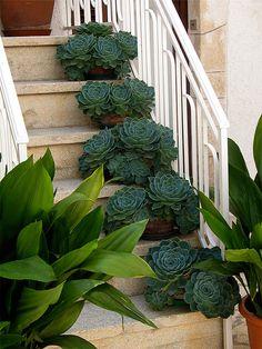Em tempos as escadas da nossa casa de Valbom já estiveram parecidas mas de vasos repletos de chorões ciclamem ....