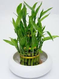 """Képtalálat a következőre: """"aloe vera air purifying plant in pot"""""""