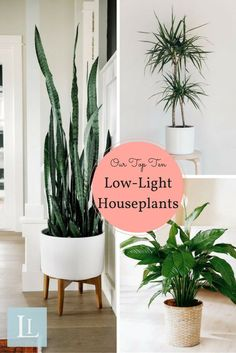 These indoor varieties are perfect for gardening beginners. Our top ten low-ligh… These indoor varieties are perfect for gardening beginners. Our top ten low-light houseplants thrive in unexpected conditions and are super easy to grow.