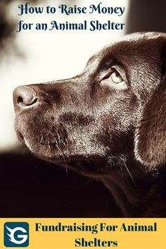 How to Raise Money for an Animal Shelter. #fundraising #animalshelters Create your online fundraising campaign at https://gogetfunding.com