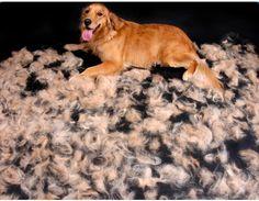 @Arion_ES  Sabes que la muda del pelo está controlada por las horas de luz y la temperatura ambiental?