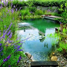 Ecological Swimming Pool? (natural)    It is a pool free from chemicals, chlorine or salt water. Only natural water. The plants are responsible for keeping the water clean and transparent.