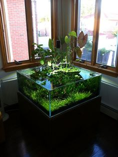 The Spawning Pool-- shallow square - Page 3 - The Planted Tank Forum Indoor Water Garden, Indoor Plants, Aquarium Fish Tank, Planted Aquarium, Aquariums, Terrarium Table, Rustic Staircase, Fish Tank Design, Container Water Gardens
