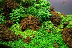 Aquascaping a Planted Aquarium - Page 2