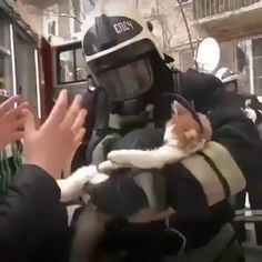 firefighters resuscitated this cat who was overcome by smoke inhalation.These firefighters resuscitated this cat who was overcome by smoke inhalation. Save Animals, Cute Baby Animals, Animals And Pets, Funny Animals, Nature Animals, Amor Animal, Mundo Animal, Cute Cats, Funny Cats