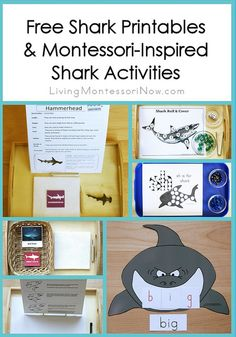 Long list of free shark printables plus ideas for Montessori-inspired shark activities using printables