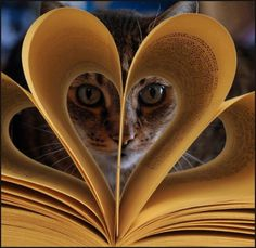 ♥ You wonder what the cat sees....same as I wonder sometimes what the author sees.