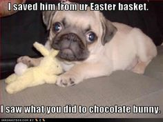 Funny Pugs with Captions | Funny dog pictures with captions, videos, poems