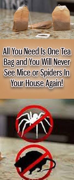 Peppermint Tea Bags ... Blend some peppermint tea, then leave the utilized sacks in the room where there are insects or mice. Placed one in each side of your room and you will begin seeing the outcomes soon!