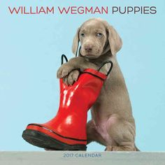 More irresistible than ever, this 2017 calendar features the all-time best of William Wegmans artful yet humorous photographs of Weimaraner puppies. A puppy tries on sunglasses for fun, three puppies