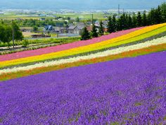 Hokkaido in bloom: In the spring and summer, the island sheds its winter weight.