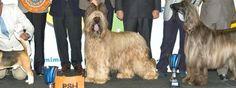 La exposición nacional e internacional de de perros vuelve a la costa del sol.