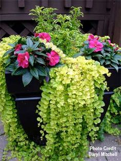 flower containers, garden ideas, potted plants, flower pot, creep jenni