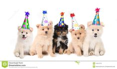 happy birthday puppy images - Google Search