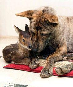 10 Surrogate Animal Mom