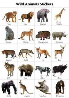 Explore our list of wild animals names in English. High-quality pictures, photos, videos, printable charts, stickers and colouring sheets for kids. Animal Activities For Kids, Animal Crafts For Kids, Animals For Kids, Wild Animals List, Funny Wild Animals, Rare Animals, Zoo Animals, Animal Pictures For Kids, Wild Animals Pictures