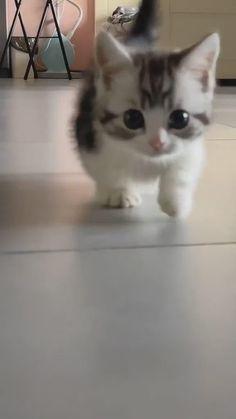 Cute Little Kittens, Cute Baby Cats, Funny Cute Cats, Cute Cat Gif, Cute Funny Animals, Funny Kittens, Cute Dogs, Baby Animals Pictures, Cute Animal Photos